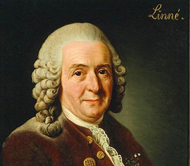 Linné, Carl von
